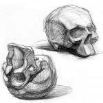 Зарисовка черепа в разных ракурсах. Угольный карандаш.